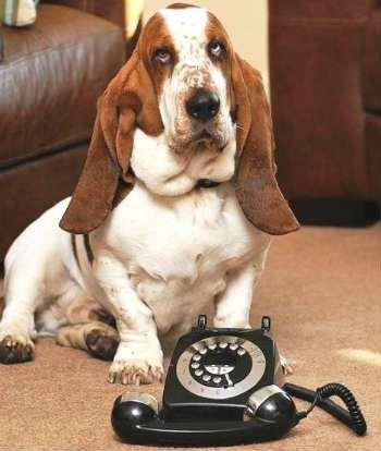 noticias El perro George salvó su vida llamando a emergencias